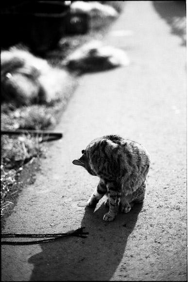 安宅のネコ